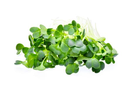 heap of alfalfa sprouts on white background Stock Photo