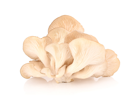 oyster mushroom on white background 版權商用圖片 - 98313299