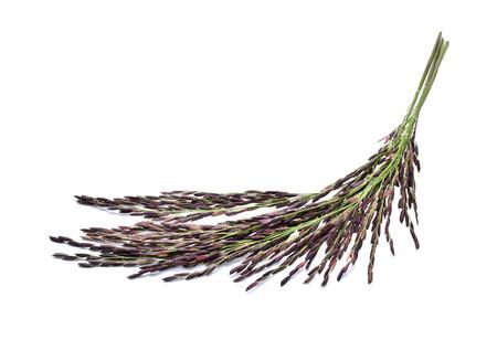 Rice berry isolated on white background Zdjęcie Seryjne - 98642838