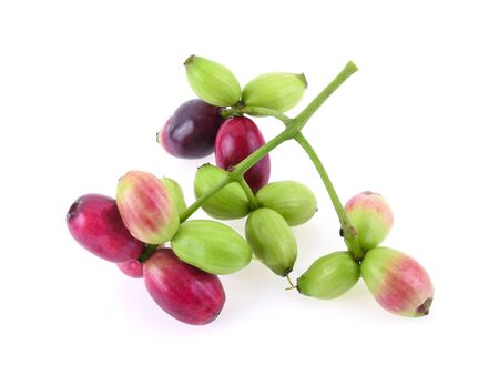 Jambolan plum or Java plum isolated on white