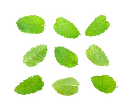 Set of mint leaves isolated on white
