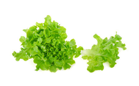 Green oak lettuce on white background Standard-Bild