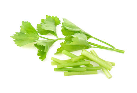 Chinese Celery isolated on white background
