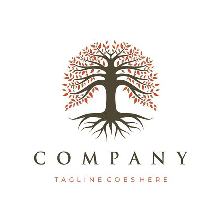 Tree of Life, Oak Banyan tree logo design template Vettoriali