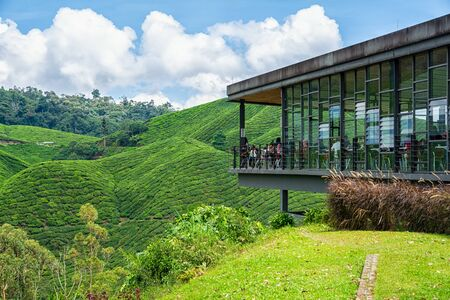 Tea plantations in Brinchang in the Cameron Highlands in Malaysia