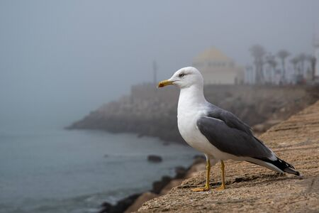 Seagull on the promenade in Cadiz
