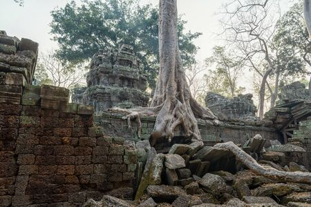 The Ta Prohm Temple near Angkor Wat in Cambodia
