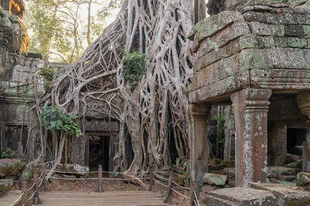 The Ta Prohm Temple near Angkor Wat in Cambodia