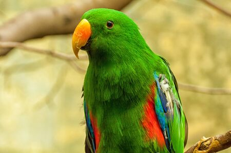 The head of a New Guinea parrot
