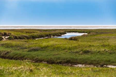 Salt marshes on the coast of Sankt Peter-Ording