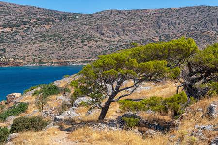 Tree on the Greek island 版權商用圖片