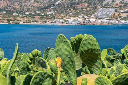 Cacti on the Greek island 版權商用圖片