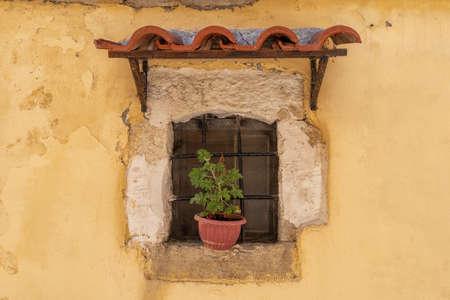 A flower pot on a windowsill with a canopy 版權商用圖片