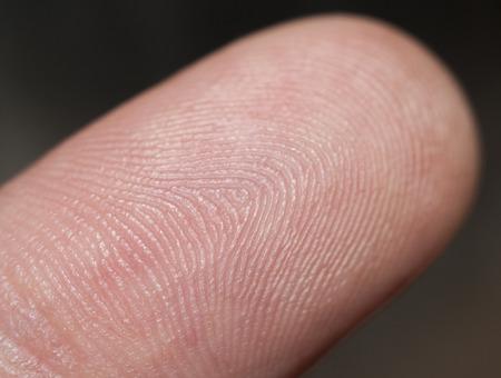 fingertip: Fingertip