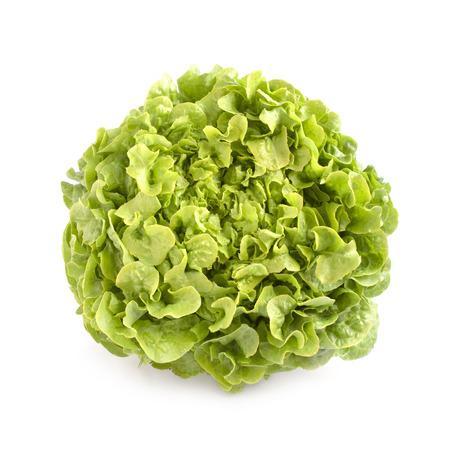nearness: Oak leaf lettuce isolated on white background