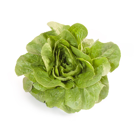 growers: Romaine Lettuce isolated on white background