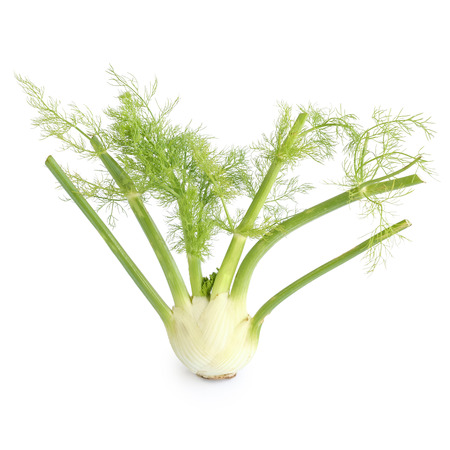 Fennel bulb isolated on white background Stok Fotoğraf