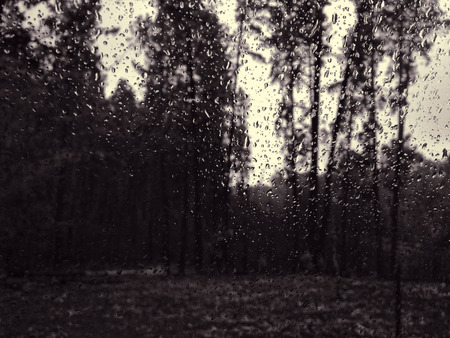 burnt: Burnt pine forest through rainy window