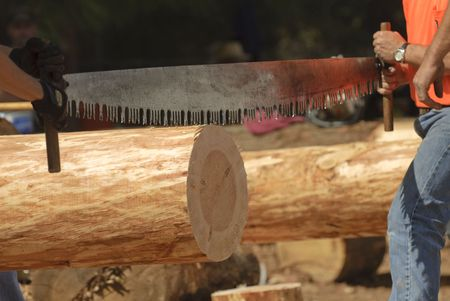 Loggers using a two-man crosscut saw in a logging competition, lining up saw