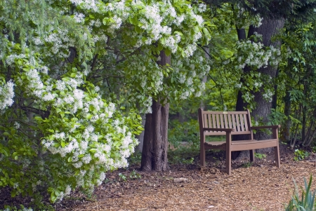 bench along path with bush in bloom inviting to rest