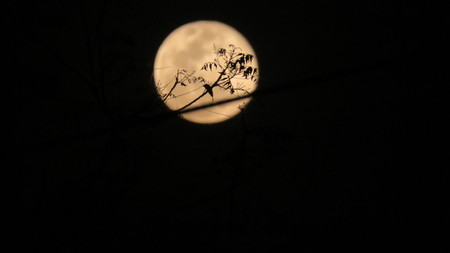 Moon behind tree branch Stock Photo
