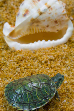 A turtle looks in vain for a new home Stock Photo