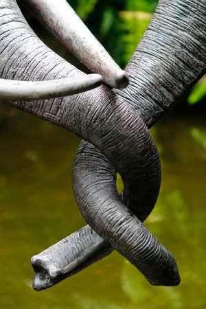 A pair of elephant trunks about to engage in an embrace