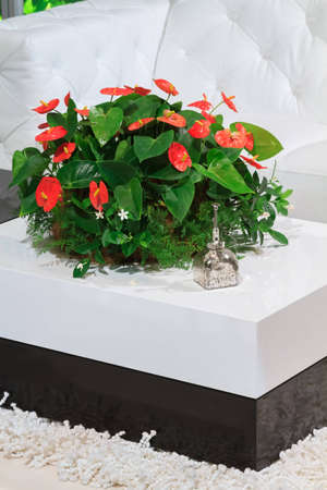 The Bright White Living Room Is Contrasted By A Vibrant Pot Of Anthurium  Flowers Photo
