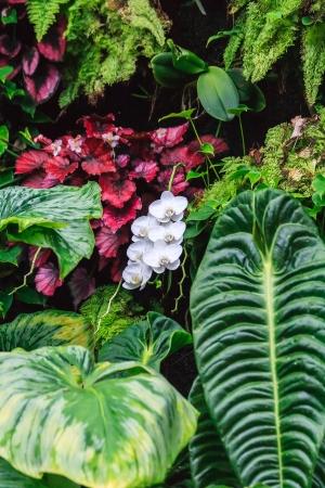 flores exoticas: Una hebra de orquídeas blancas silvestres situado entre las hojas grandes y plantas