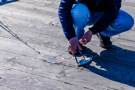 A fisherman handles a landed herring on the pier with tongs. Stock Photo - 58302740