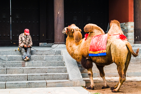 An old man with a camel waiting for customers who want to ride the camel. Stock Photo