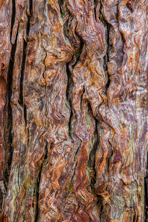 Close up an ancient tree in Japan revealing its textures