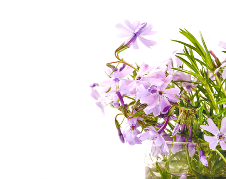 Bouquet of lilac flowers on a white background. Phloxes in a transparent can, copyspace at the left, selective focus