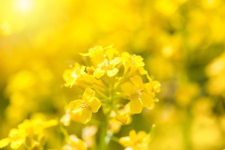 The yellow flower which is brightly lit with the sun. Close up, soft focus, small depth of sharpness