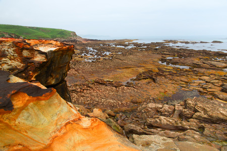 Stones on the ocean coast during an outflow. The stony coast, an outflow has bared the stones covered with seaweed.