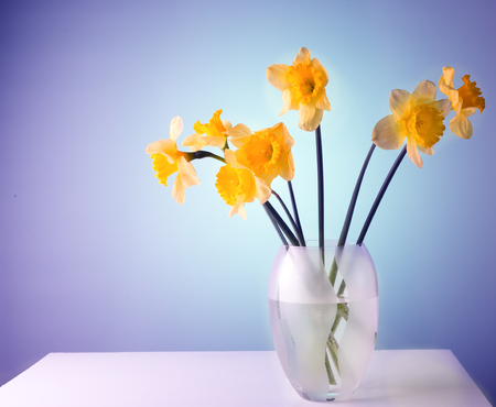 Narcissuses in a glass vase on a white table yellow flowers narcissuses in a glass vase on a white table yellow flowers a color blue mightylinksfo