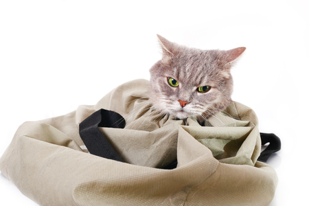 The cat in a bag, the head sticks out of a bag. A gray cat, it is isolated on a white background Stock Photo