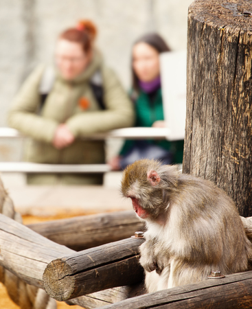 Sad monkey in a zoo. On a background indistinct figures of visitors of a zoo. Hands of a monkey and a hand of visitors are crossed equally. Selective focus, indistinct background