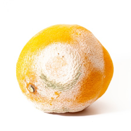 A spoiled orange with white and green mold, on a white