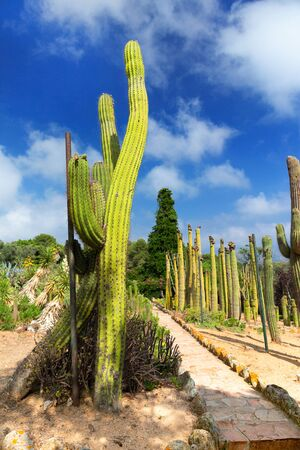 Cactus Garden in Lioret de Mar, Catalonia, Spain.