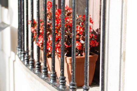 Street garden planter with flowers behind bars on the window