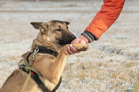 The dog gives a paw to the owner during a country walk. Stock fotó