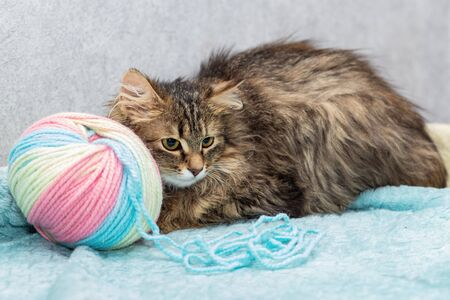 Fluffy breedless cat lies next to a large tangle of wool.
