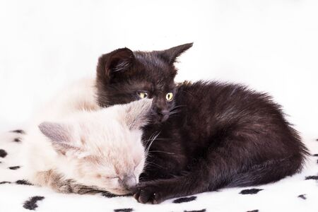 Two kittens on a white background