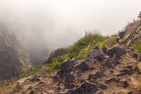 View from the tourist trail to the peak of Ruivo in Madeira on vegetation and dry tree skeletons. Trees were damaged during one of the forest fires, frequent and devastating for nature in Madeira. Standard-Bild