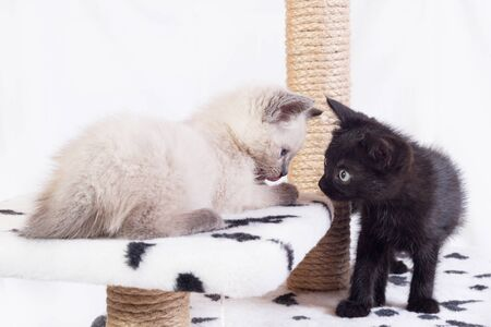 Two little funny kittens, white and black, sit on the game complex. Kittens clung to each other. Banco de Imagens