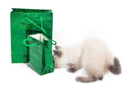 Thai light kitten and two gift bags are the concept of preparing gifts for the holiday. Banco de Imagens