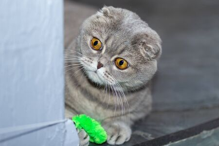 A grey cat plays with a toy on a rope around the corner.