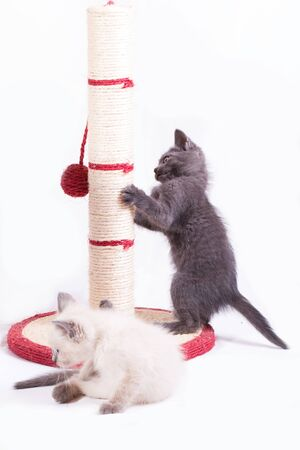 Two little funny kittens play with a jute claw. Banco de Imagens