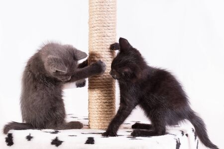 Little funny kittens play with each other in the game complex for cats. Banco de Imagens